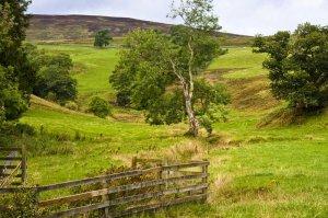 Scottish Lowlands scene
