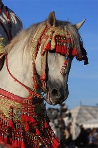 el jadida horse