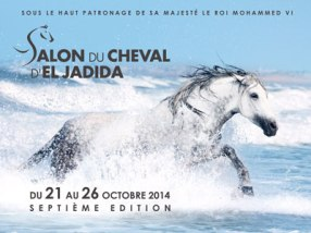 el jajdida horse fair and show maroc-salon-du-cheval-2014