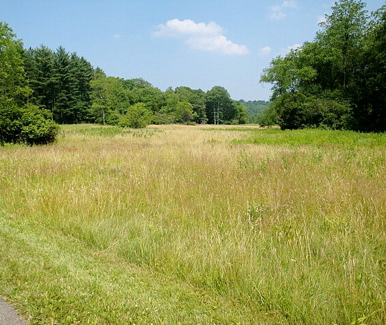 The_Great_Meadows2
