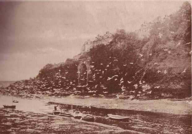 Cornwall, Looe - Seagulls