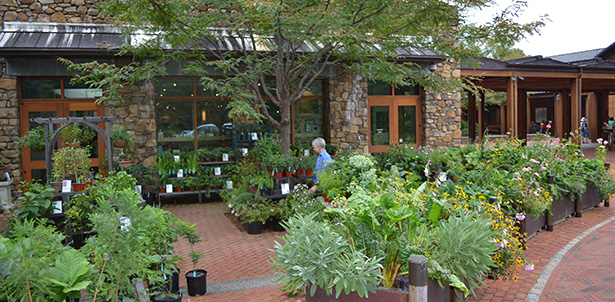Garden Shop 8.18.14 013.small_.cropped_0