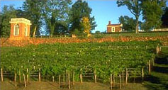 vineyard_md_0