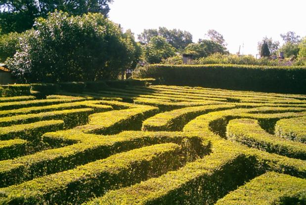 maze-primary